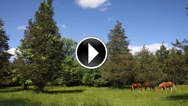 South Quaker Hill video