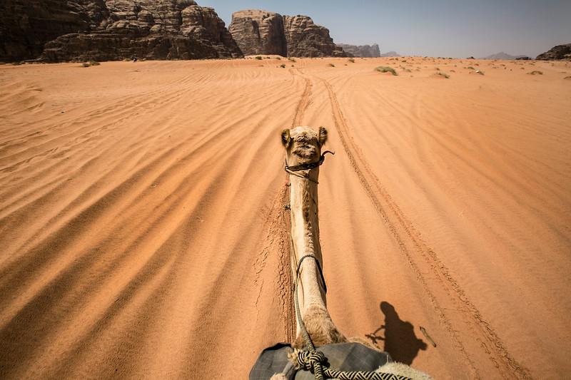 camel ride wadi rum.JPG