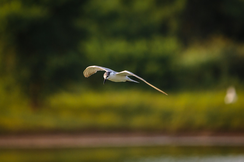 A Bird in Undwalawe National Park