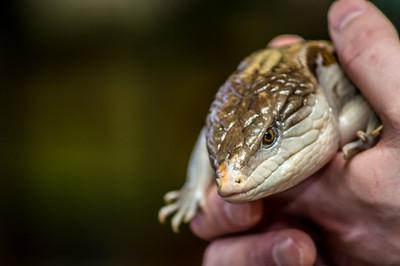 Zoo Creatures 3-27-2013