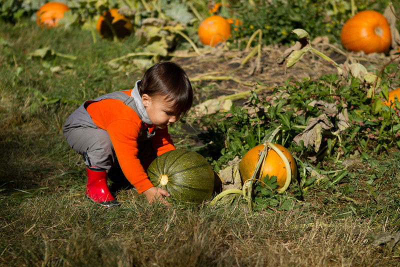 PumpkinPatch2012-275.jpg