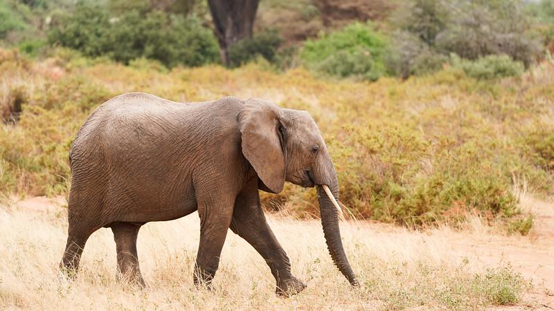 safari-2018-34.jpg