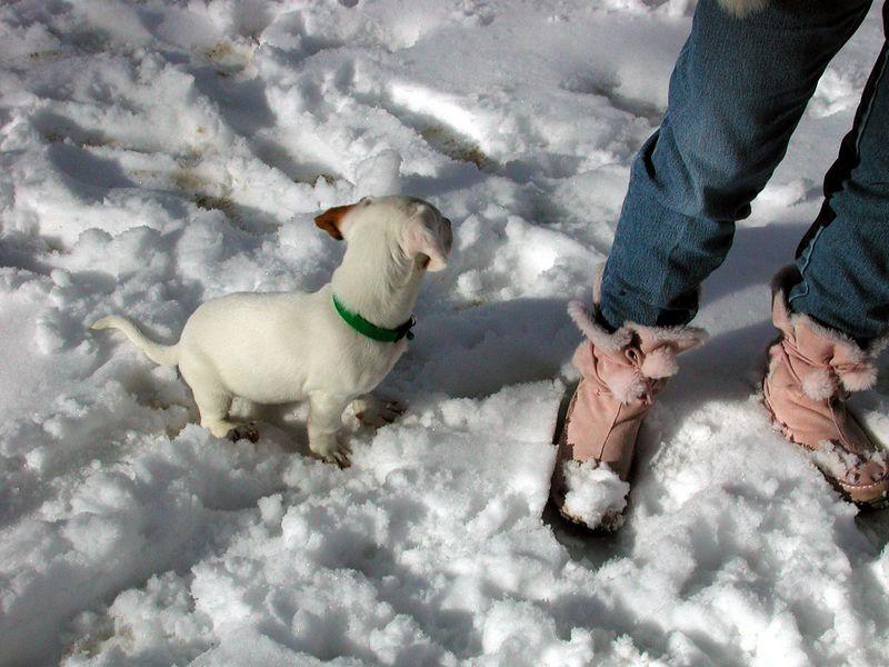 Feb 05- Puppies 002_edited.jpg