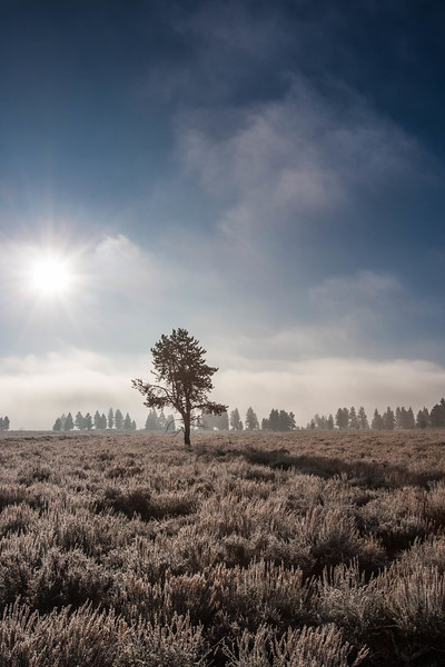 Early morning Truckee meadow