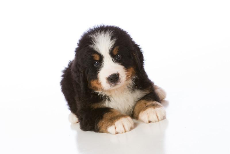 2013-Pearson Pups-Jun02-0241.jpg