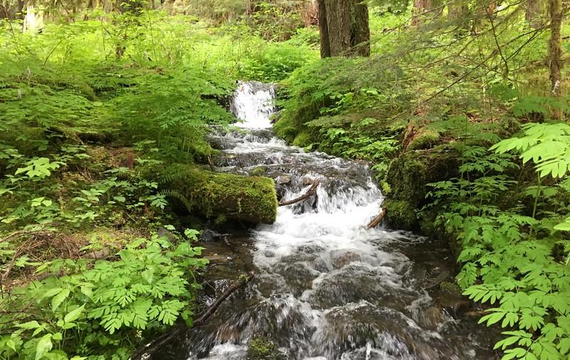 Lovely little stream