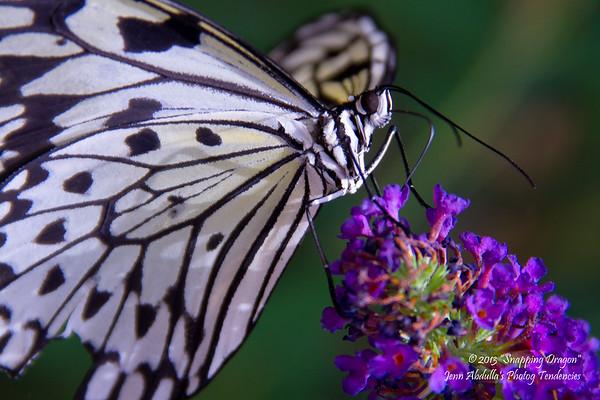 Butterfly Wonderland Trip 7-2013