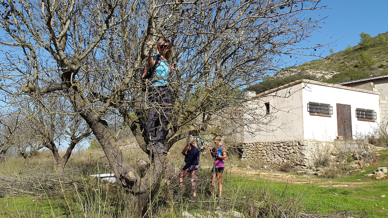 Picking almonds on the de Cao route