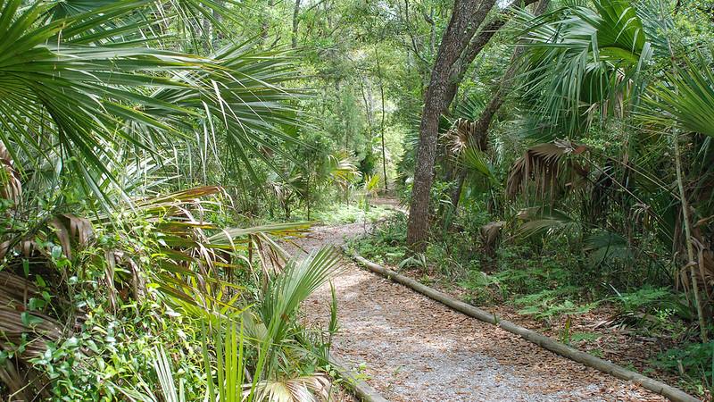 Apalachicola Reserve Scipio Creek