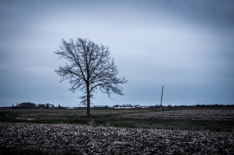 2017.04.01 - tree in field close to Dad's childhood farm house - Tennessee, IL