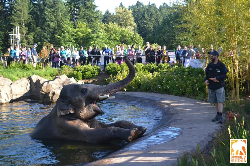 Anzelina-Coodey_Solstice-Run-Oregon-Zoo_020.jpg