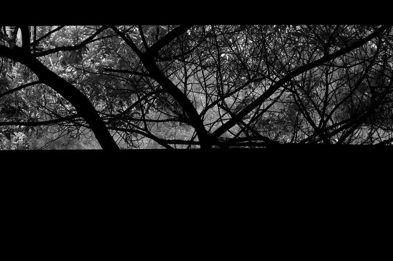 20101219-_DSC3213-Edit.jpg
