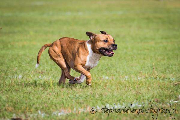 _MG_2569Up_dog_International_2016_StephaniellenPhotography.jpg