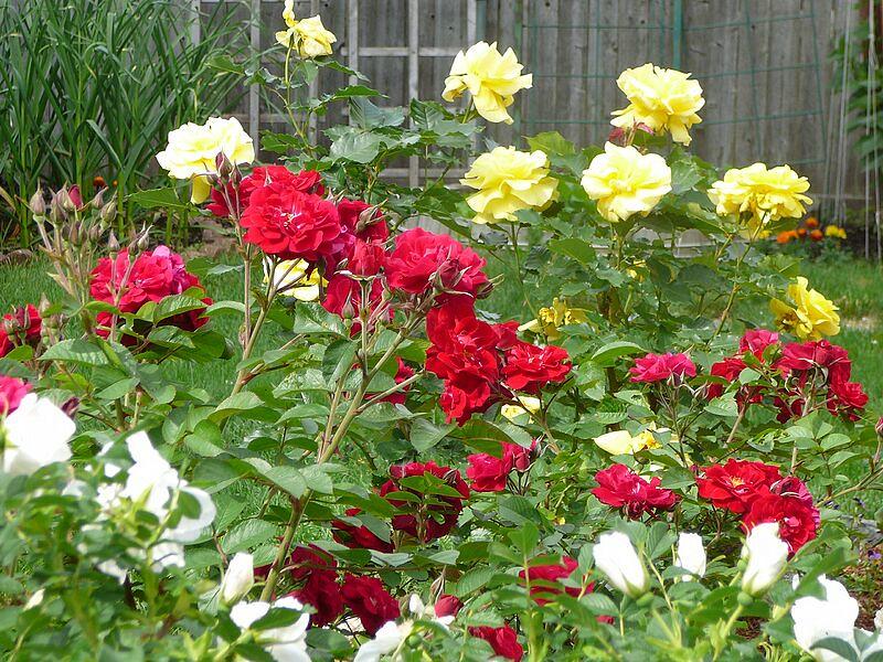 garden-2009-06-0736_std.jpg