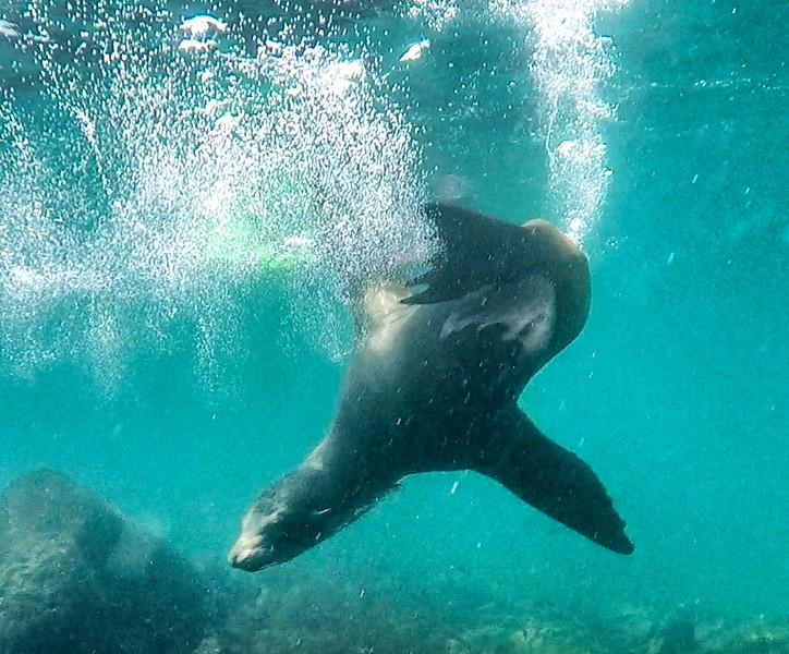 Sea Lion 3-2.jpg