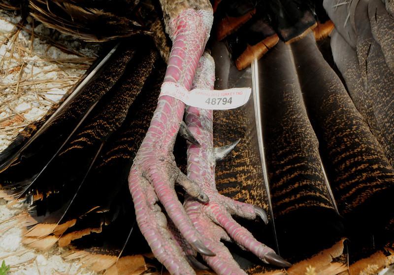 MMGINC Gobbler Hooks APR 2012_123.jpg