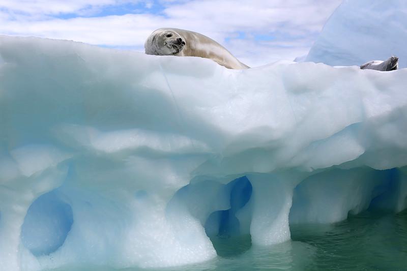 Antarctica_35.JPG
