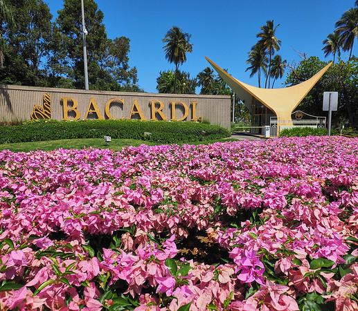 Bacardi & Arecibo Observatory Gallery