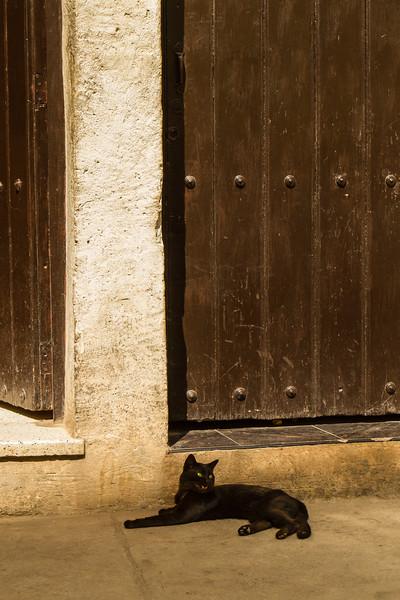 kiel-cats-01.jpg