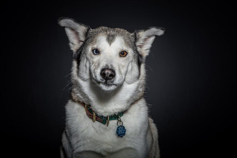 dogs_at_trek_Kennel-6955.jpg