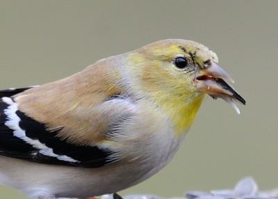 Bird closeups, February 19, 2019