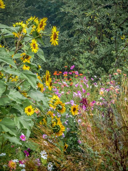 beautifulflowerlinedpath.jpg
