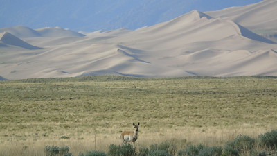 Great Sand Dunes NP&P