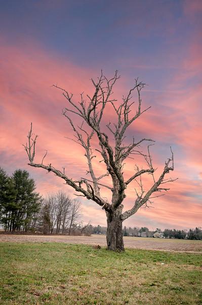 2020-12-08 Dead Tree-101.jpg