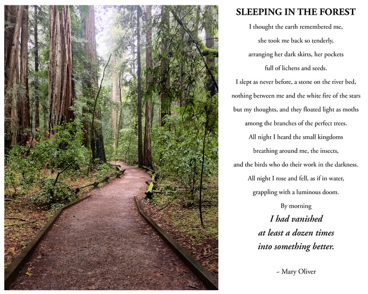 sleeping in the forest-01.jpg