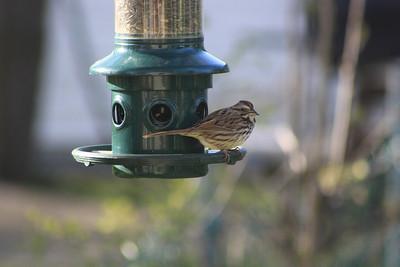 Summer Birds & Erection Sites