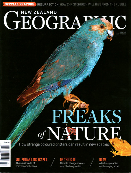 The May 2011 issue of NZ Geographic includes Rod's cover story on colour morphs, and his tribute to the late, great Don Merton.  This cover was a finalist in the 'Maggies' for that year - The Award for  Best Magazine Cover of the Year
