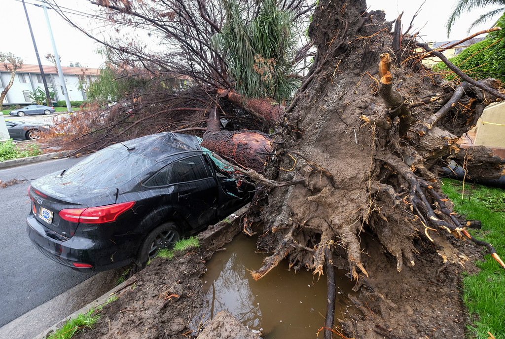 . A fallen tree crushes a car outside a residence Saturday, Feb. 18, 2017, in Sherman Oaks section of Los Angeles.  A huge Pacific storm parked itself over Southern California and unloaded, ravaging roads and opening sinkholes.   (AP Photo/Ringo H.W. Chiu)