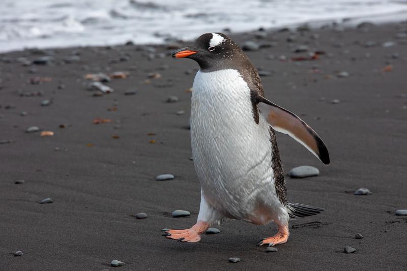 2019_01_Antarktis_01474.jpg