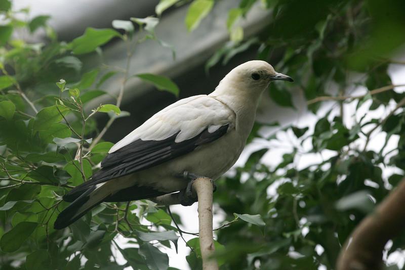 Newquay Zoo 354.jpg