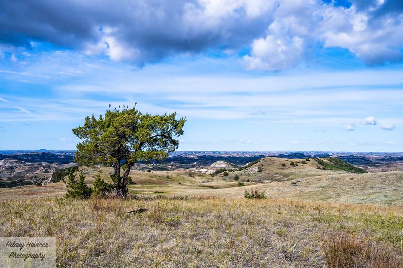 Theodore Roosevelt National Park-382.jpg