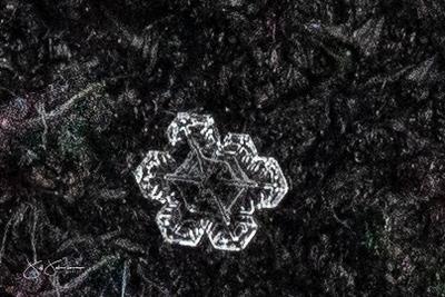 snowflakes-1579.jpg