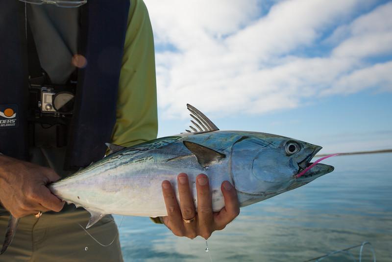 flyfishingnewengland.westportfall15-24.jpg