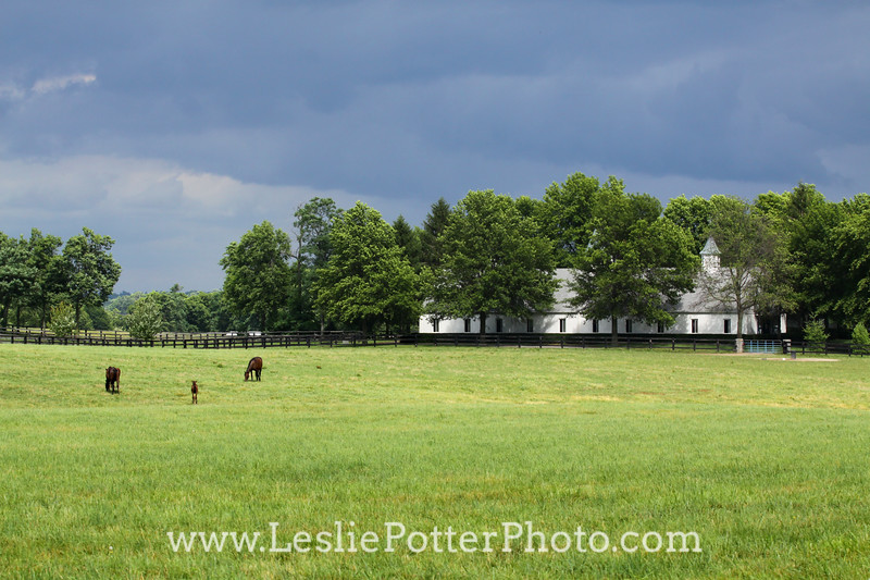 Horse Farm Under Gray Storm Clouds