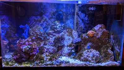 2018-11-25-28 - Reef Tank