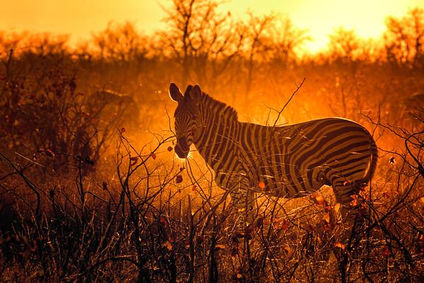 Kruger National Park - Second Trip