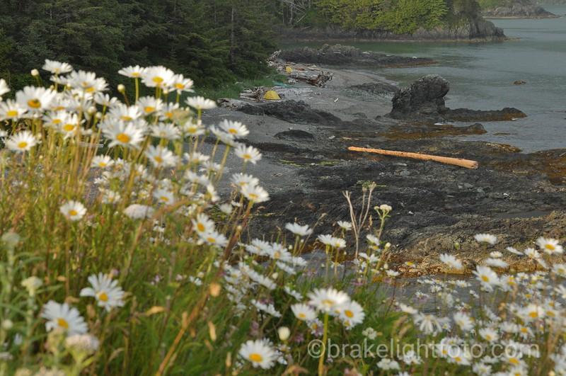 Campsite on the Nutchatlitz Inlet