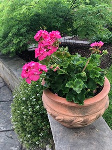 Garden and property in Bethesda
