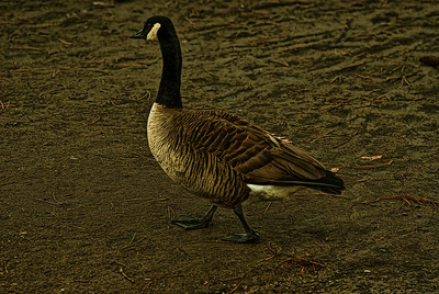 Birds : Prospect Park : Brooklyn