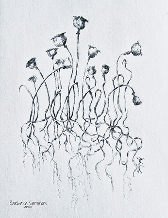 Poppies - A Study in Pencil