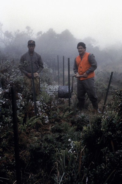 Dino Brown and Hanky Eharis, Kipahulu section of Haleakala National Park, fencing MC* Bog (*Midcamp?); photographer unknown; date unknown (photoID: bhg002051)