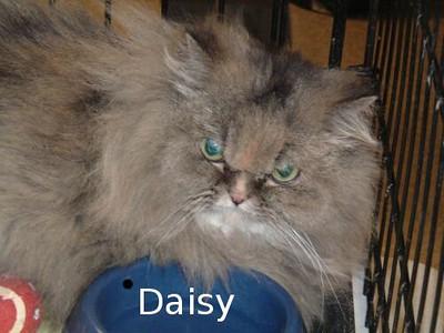 Critter Chronicles: Daisy