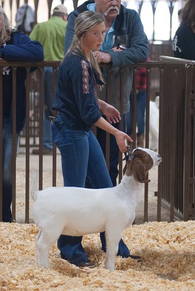 kay_county_showdown_goats_20191207-146.jpg