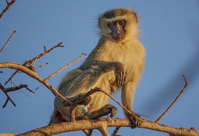 Day 3, Kruger National Park