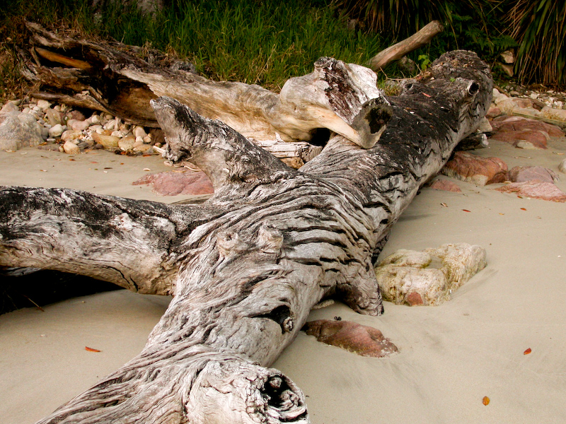 Beach wood - Coromandel, New Zealand