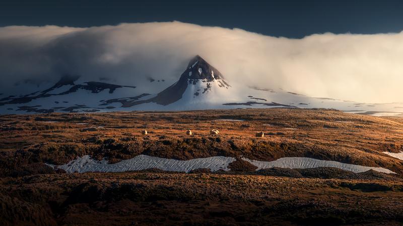 sheeplands.print.jpg